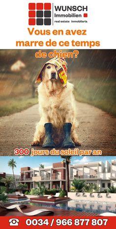 Costa, Spain, Dogs, Animals, Dog, Real Estates, Animales, Animaux, Sevilla Spain