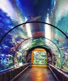 24 best mandalay bay hotel images mandalay bay hotel las vegas