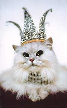 Persian cats are beautiful - www.coolcattreehouse.com