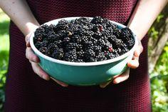 Blackberries   A Dutchie Baking