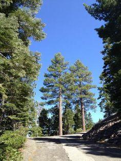 #Ponderosa #Pines #LakeTahoe #RoadTrip #StateParks #California #Ramblr
