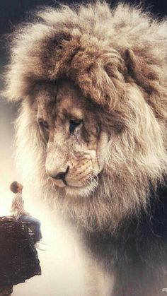 Power in itself is not a blessing unless it is used to protect innocents. by Jonathan Swift Giant Animals, Animals And Pets, Baby Animals, Cute Animals, Lion And Lamb, Lion Love, Lion Wallpaper, Tribe Of Judah, Lion Pictures