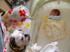 Bulldog, Lilly, makes sure Aiden is doing alright.  Tiffanie J