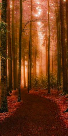SEASONAL – AUTUMN – fall leaves in brilliant colors in the mystical forest of hungary, photo by andy. Beautiful World, Beautiful Places, Mystical Forest, Effects Photoshop, Tree Forest, Forest Scenery, Forest Road, Magic Forest, Forest Landscape