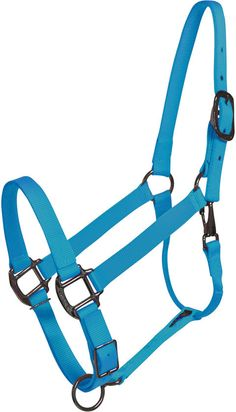 Turquoise Horse Halter. Love the color.