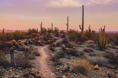 """brianstowell: """"Organ Pipe Cactus National Monument, Arizona Available as a print on my Society 6 My Instagram """""""
