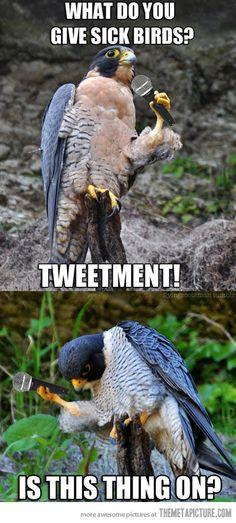A falcon tries comedy…