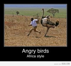 Photo of Angry Birds Funnies! for fans of Angry Birds 28005852 Angry Birds, Funny Dogs, Funny Animals, Big Animals, Crazy Animals, Funny Birds, Animal Jokes, Justin Bieber Jokes, Mal Humor