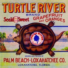Turtle River :: Florida Southern College Fruit and Vegetable Crate Label Collection Vintage Labels, Vintage Ads, Vintage Signs, Vintage Posters, Retro Ads, Art Posters, Travel Posters, Palm Beach Florida, Florida Sunshine