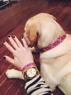 Friendship Collar for dogs or cats & their humans (best friends!)