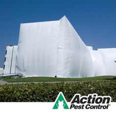 What you need to know before a commercial fumigation.