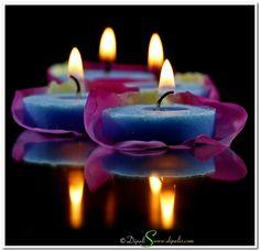 Blue candles on pink rose petals.