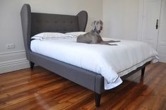 Elegance all around.  http://www.desiretoinspire.net/blog/2011/11/14/mondays-pets-on-furniture-part-1.html
