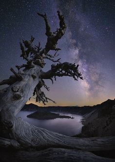 Pointing The Way by Deb Harder on 500px... #Crater Lake #Crater Lake National Park #Milky Way #Old Tree #September #clear night #nightime #stars #Southern Oregon