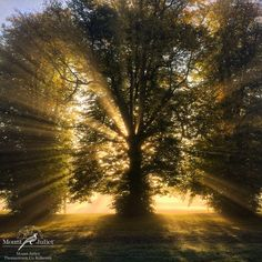 A foggy but beautiful start to a mid-October morning at Mount Juliet Estate, Co. Kilkenny - www. Mount Juliet, 5 Star Hotels, October, Country Roads, Sunset, Outdoor, Beautiful, Outdoors, Sunsets