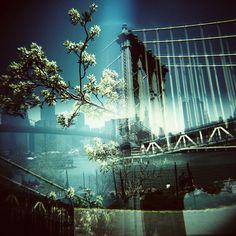 'New York's trees' Double exposure in half format / Doble exposición en medio formato #Lomography #Lomo #AnalogueLove #Lomografía
