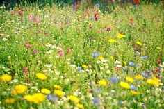 Field of Dreams - Nature photography, wild flower photo, meadow flowers, dreamy, nature art, country garden, colourful decor on Etsy Shop: LolasRoom  Doesn't that just scream God to you?