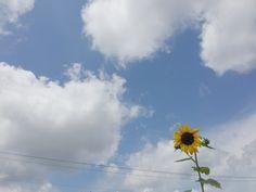 Blue Aesthetic, Aesthetic Photo, Sleepy Girl, Akaashi Keiji, Hetalia, Summer Vibes, Flower Power, Sunshine, Ocean