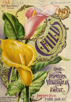 30th Anniversary Edition (1905)of Childs' Rare Flowers, Vegetables and Fruit' with an illustration of 'Glorious New Callas.' John Lewis Childs, Floral Park, N.Y. U.S. Department of Agriculture, National Agricultural Libraryarchive.org