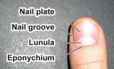 Nails Inc, Us Nails, Pale Nails, White Nails, Natural Styles, Nail Plate, Strong Nails, Diy Spa, Blood Vessels