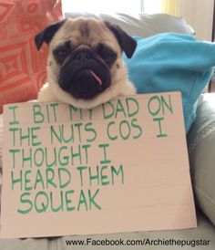 I just BOL for real, smh. Cute Dog Memes, Funny Animal Memes, Funny Animals, Cute Animals, Animal Humor, Funny Memes, Silly Dogs, Funny Cats And Dogs, Pug Pictures