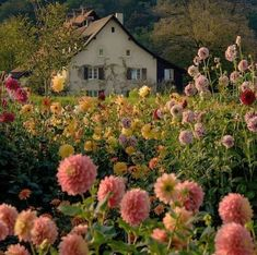 Farmhouse Garden, Garden Cottage, Prairie Garden, Farm Cottage, Cottage House, Cozy Cottage, Beautiful Gardens, Beautiful Flowers, Beautiful Places