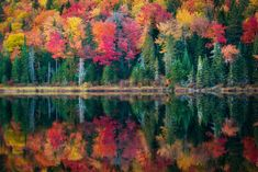 Vivid autumn leaves reflecting in a lake in La Maurice National Park Quebec Canada. By Tracy Munson [2048 x 1367]