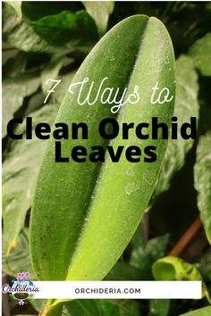 Orchid Roots, Orchid Leaves, Plant Leaves, Phalaenopsis Orchid Care, Orchid Plant Care, Growing Orchids, Growing Plants, Water Plants, Garden Plants