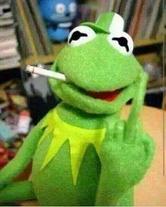 Go Fuck Yourself Kermit Style! Frog Wallpaper, Iphone Wallpaper, Meme Pictures, Reaction Pictures, Dankest Memes, Funny Memes, Hilarious, Sapo Kermit, Memes Lindos