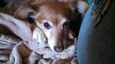 Slideshow landing page - KSLA News 12 Shreveport, Louisiana News Weather & Sports Shreveport Louisiana, National Puppy Day, Severe Weather, Cute Puppies, Landing, Photo Galleries, Corgi, Gallery