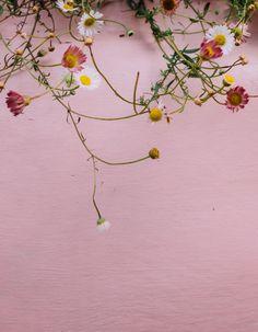 Delicate flowers | Hesby ✌ (@shophesby) boho modern home decor + lifestyle