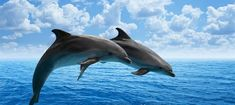 Wild dolphins safe from Sea World Australia's overseas parks Feel Good News, Tropical, Delphine, Sea World, Its A Wonderful Life, Guided Meditation, Endangered Species, Under The Sea, Animal Rescue