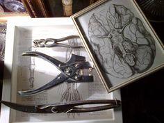 Victorian medical drawings