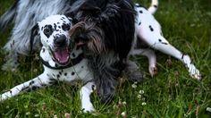I feel good. Kokkie with Friends Video Photography, Fine Art Photography, Friends Video, Dalmatian Dogs, I Feel Good, Home Art, Rainbow, Feelings, Videos