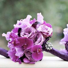 #african violet