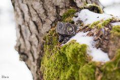 ThreeA, DIRTY DEEDS SQUARE, forest, snow, square, eltara.ru, eltara, sakhalin