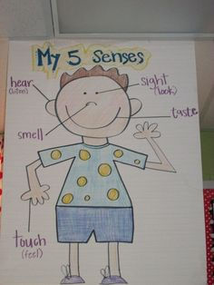 5 Senses Anchor Chart, seeing and identifying senses parts and words Más Five Senses Kindergarten, Five Senses Preschool, 5 Senses Activities, My Five Senses, Kindergarten Anchor Charts, Science Anchor Charts, Preschool Lessons, Science Classroom, Kindergarten Activities