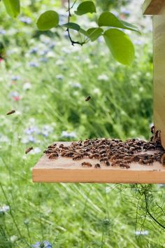the times the colony would swarm or dance towards the direction of where pollen was to be found :)