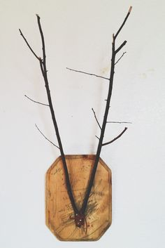 Mounted Branch Antlers...  Thedoeorthedeer.blogspot.com Instagram//@thedoeorthedeer