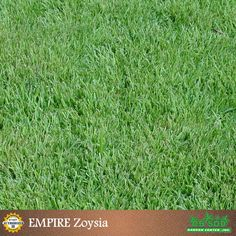 Order pallets of Zoysia sod to be delivered to any address in the Tampa Bay Area or pick up at our Tampa store. Empire Turf, the proven Zoysia grass. Zoysia Sod, Zoysia Grass, Sod Grass, Fake Turf, Root Structure, Zone 7, Small Backyard Patio, Need To Meet, Artificial Turf