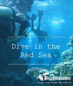 Dive the Red Sea www.bucq.com #redsea
