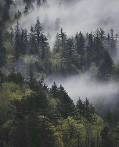31 Neue Ideen Natur Wald Berge Nebel Kiefer - 31 New Ideas Nature Forest Mountains Mists Pine 31 Neue Ideen Natur Wald Berge Nebel Kiefer Misty Forest, Forest Mountain, Foggy Forest, Forest Art, Forest Photography, Landscape Photography Tips, Mountain Photography, Photography Flowers, Photography Ideas