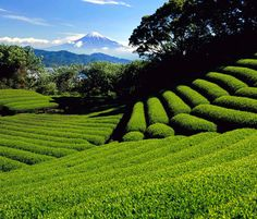 Nihondaira. A Vast Land with Natural Greenery and Spectacular Views of Mt. Fuji, Japan.