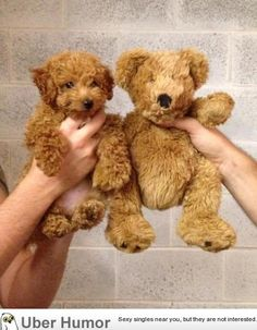 Can barely tell the difference... I want a puppy teddy bear!!!