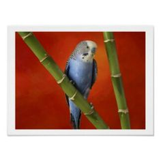Parakeet Parakeets Parrots Parrot Wallpaper Animal Wallpaper Nature Wallpaper Hd Wallpaper