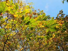 Herbst, autumn, automne, aŭtuno, Осень, 秋,