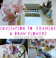 Invitation to Examine and Draw Flowers - The Imagination Tree