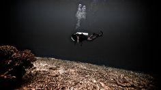Another underwater golf field. #FightDestructiveFishing