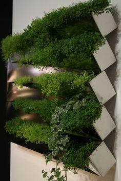 Miroir en Herbe Wall flowerpot Stainless steel by Compagnie