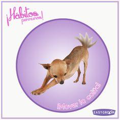 #Hábitosperrunos ¿En qué momentos tu perrito mueve la colita?